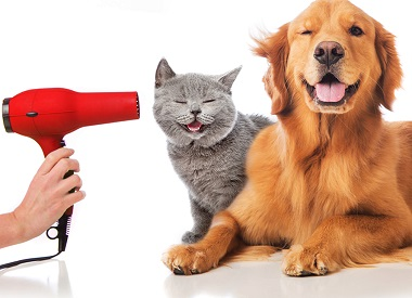 How to enjoy hassles free grooming service for your pet?