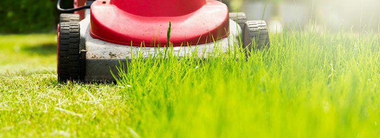 Utilize your knowledge effectively to maintain your lawn from your perspective.
