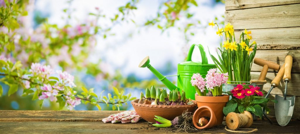 How many gardening products can we get if we will shop from this site today itself